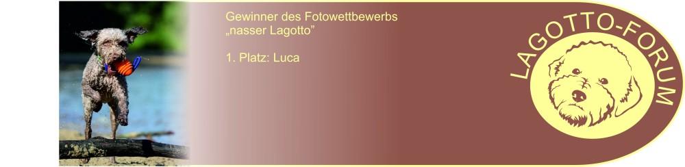 Lagotto-Forum