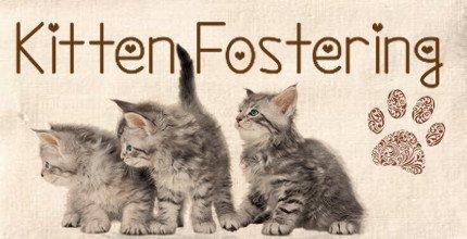 Tagesnews: Kitten Fostering